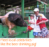 Meet local celebrities - like the beer drinking pig!